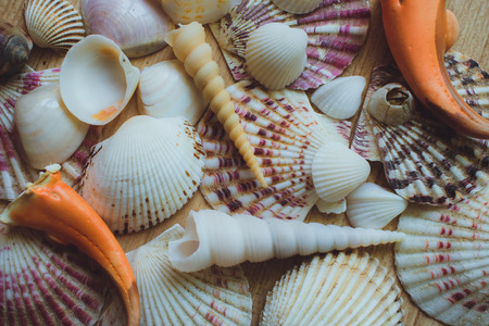 Bunch of seashells on still life. Image can be used as background.