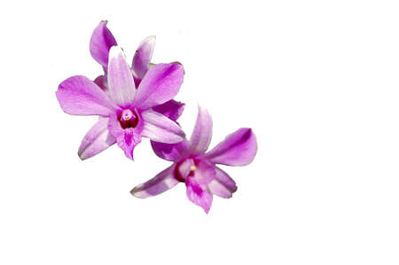 exporter: Orchids