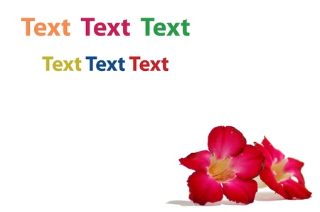 flower and text photo