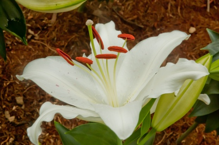 White flower closeup view photo