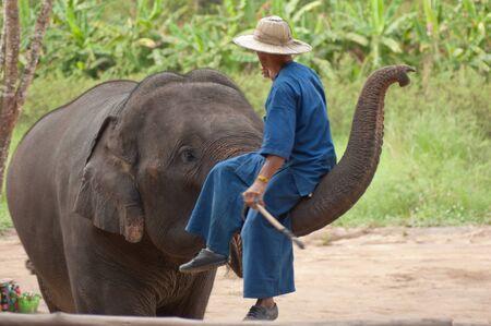 Asia elephant show