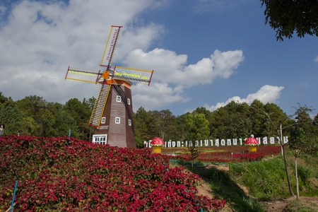 Red flowers   beautiful windmill photo