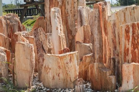 petrified: Petrified Wood  Stock Photo
