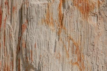 petrified fossil: Petrified Wood  Stock Photo