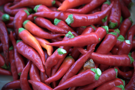 chilly: red hot chilly pepers with fresh green stem