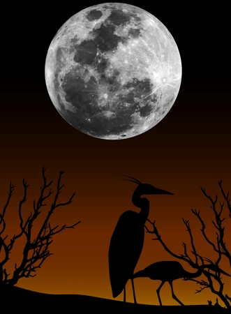 couple stork in the night
