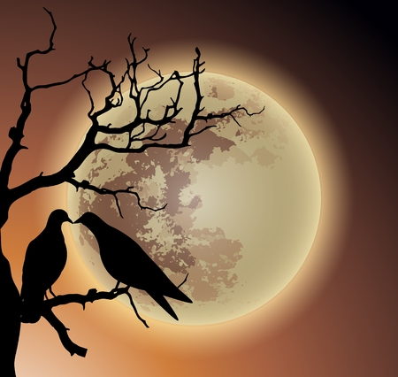 couple pigeon kissing on dead tree in the moon light sillhouette