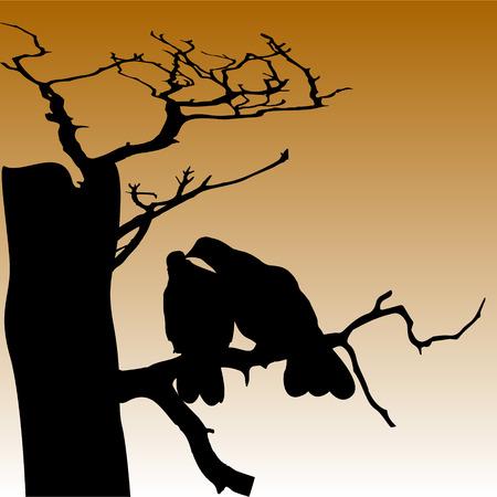 couple pigeon  on dead tree sillhouette