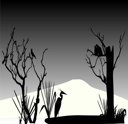 pond life: birds in autumn Illustration