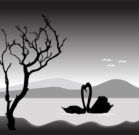 swan lake: couple of swan on the lake