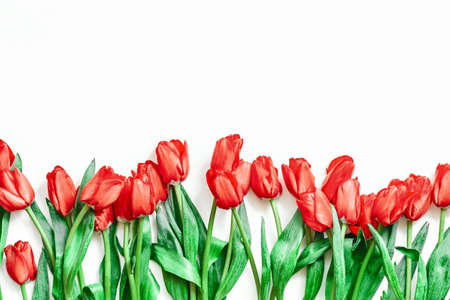 Flatlay de tulipanes sobre fondo blanco. Verano o primavera. Dia Internacional de la Mujer. Copie el espacio. Espacio vacio. Foto de archivo