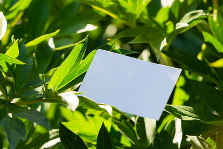 White blank business card on flowers background. Beautiful and fresh landscape. Stationery copy and empty space.