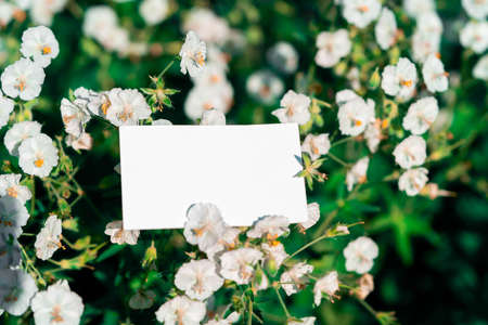 White blank business card on flowers background. Beautiful and fresh landscape. Stationery copy and empty space. Contacts.