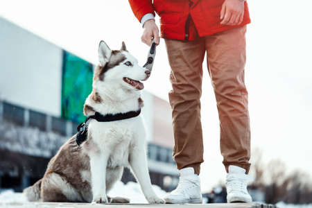 Man and Siberian Husky dog on a walk in modern contemporary park on sunny winter day. Human and animal Love and friendship concept. Life after shelter.