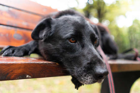 Close up of cute homeless abandoned sad dog at bench in park waiting for her human family and new home. Animal adoption and care for animals from shelter. Reklamní fotografie
