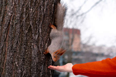 Senior Woman Feeding Squirrel In Park. Relaxing And Active Lifestyle in Middle Age.