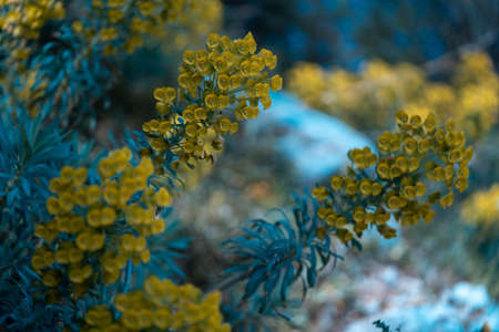 Blooming flowers on blue