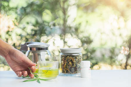 Hand pick cup hot drink made by infusing the fresh leaves of the marijuana leaf in boiling water. Beverage ganja in cup for drink. Concept alternative herbs for healing.