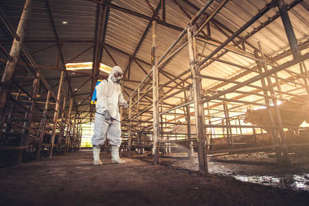 People wearing personal protective equipment or PPE with spraying disinfectant for protection pandemic of disease in cattle farm. Agriculture cattle farm industry. Foto de archivo