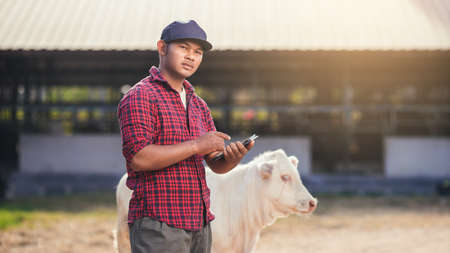 Agriculture industry cattle farming, Smart farmer use technology tablet for livestock and husbandry control. Portrait Asian man with small calf in farm.