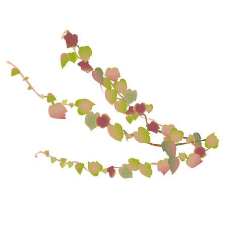 Illustration of a vine of ivy leaves Иллюстрация