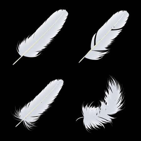 White Feather Illustration Иллюстрация