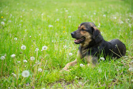 named person: beautiful dog lying on the grass on a Sunny day Stock Photo