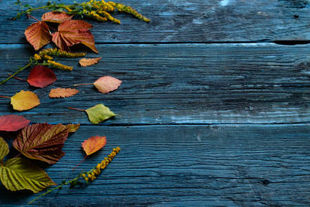 Beautiful autumn leaves on a blue wooden background.