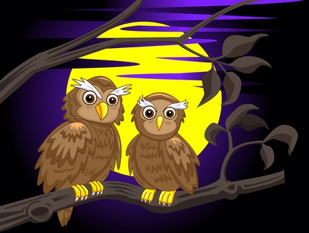 couple owl create by illustrator photo