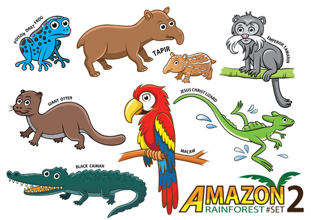 poison frog: Conjunto de animales de dibujos animados lindo y aves en las zonas amazónicas de América del Sur sobre fondo blanco. veneno de la rana dardo, el tapir, el tití emperador, lobo de río, guacamayos, lagarto de Jesús Cristo, el caimán negro