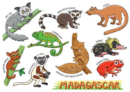 Set of Cute cartoon Animals and in the Madagascar areas isolated on white background.  aye-aye; ring tailed lemmur; fossa; chameleon; tenrec; sportive lemur; sifaka; satantic leaf gecko; tomato frog