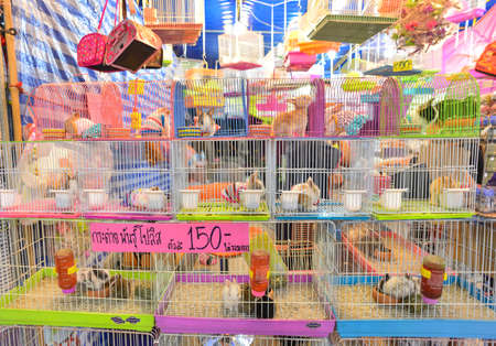 petshop: Rabbits in cage