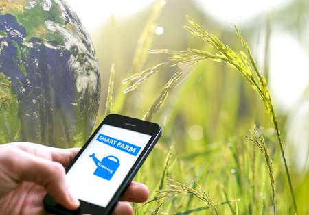 Smart farming concept, Rice, Agriculture