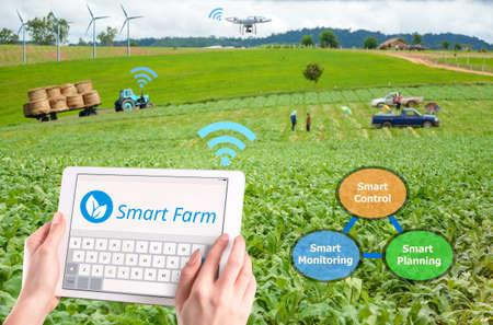 똑똑한 농업, 하이테크 농업 개념 스톡 콘텐츠