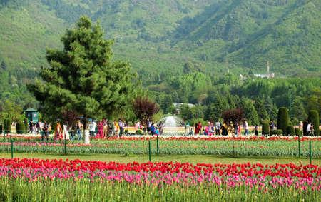 Srinagar, India - April 22, 2017 : Indira Gandhi Memorial Tulip Gardens, in Srinagar, Jammu and Kashmir, India Stock Photo - 77867938