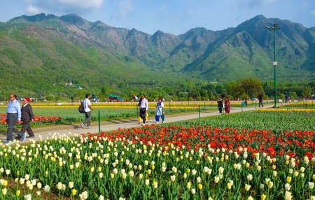 Srinagar, India - April 22, 2017 : Indira Gandhi Memorial Tulip Gardens, in Srinagar, Jammu and Kashmir, India Editorial