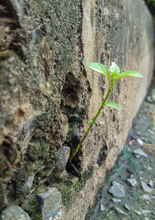 crack: Tree growing through cracked wall Stock Photo