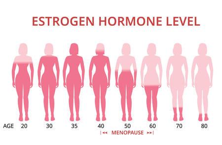 Tableau des niveaux d'hormones œstrogènes, ménopause, vecteur