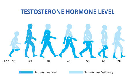 Testosterone hormone levels chart, vector