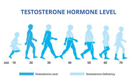 Testosterone hormone levels chart, vector Vector Illustration