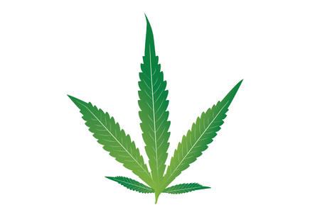 Cannabis marijuana leaf, Cannabis Indica Çizim