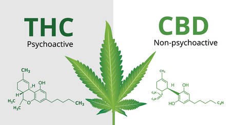Cannabidiol (CBD) and Tetrahydrocannabinol(THC) with Marijuana leaves, Vector illustration