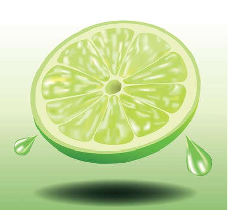 Sliced Fresh Lemon Lime, Fruit, Realistic Vector illustration
