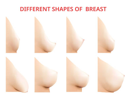 Different shapes of Breast, Women Breast, Vector illustration Illustration