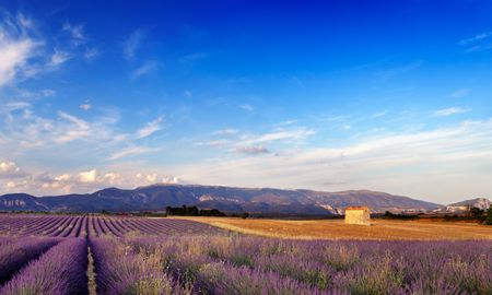Landscape image with a lavender field and a small barn in Provence, France.