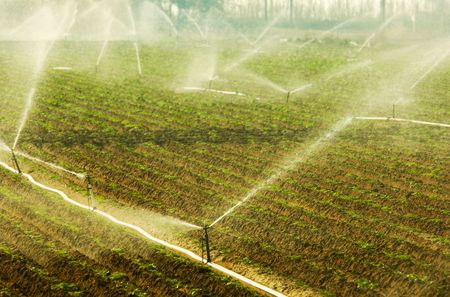 Image shows a vegetable growing field being irrigated in the early hours of the morning