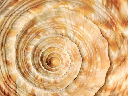 Closeup image of a sea shell with a beautiful spiral texture
