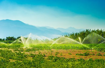 Irrigation sprinklers in a vegetable producing farm during a hot summer morning Stock Photo
