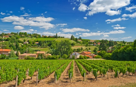 Vineyard in the famous wine making region of Beaujolais, France, during a pleasant summer morning Stock Photo