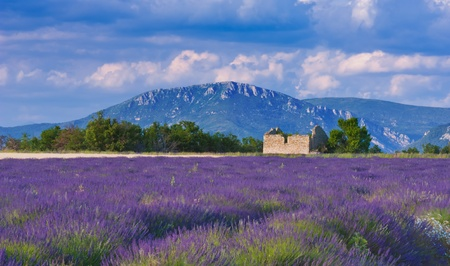 Landscape in Provence, France, with lavender field and an abandoned old barn during a windy afternoon Stock Photo - 9373502